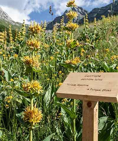 Domaine Clarins flowers