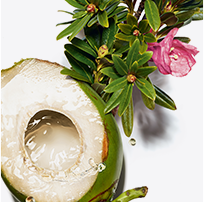 Coconut Water and Alpine Rose