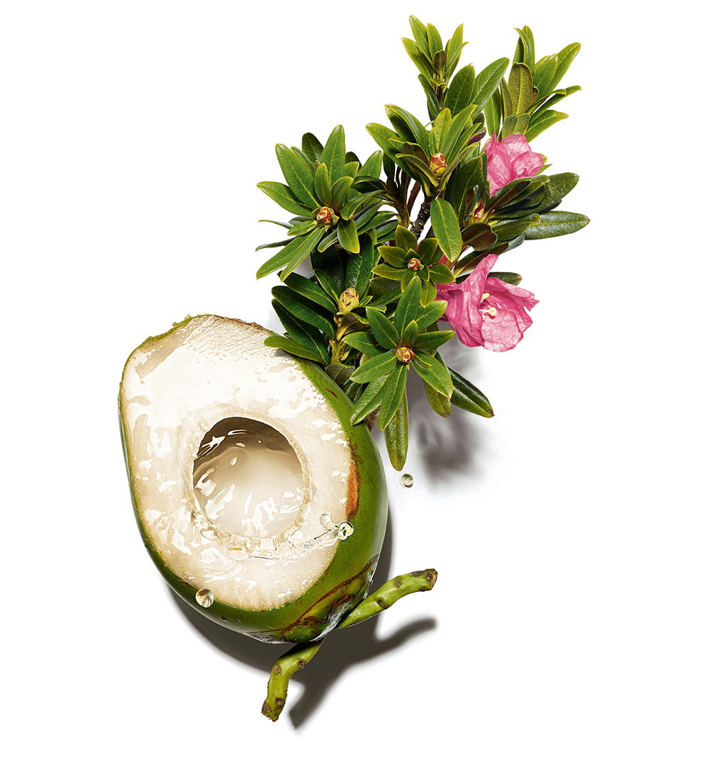 Coconut water and alpine rose visual