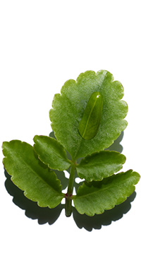 Organic Leaf ofLife
