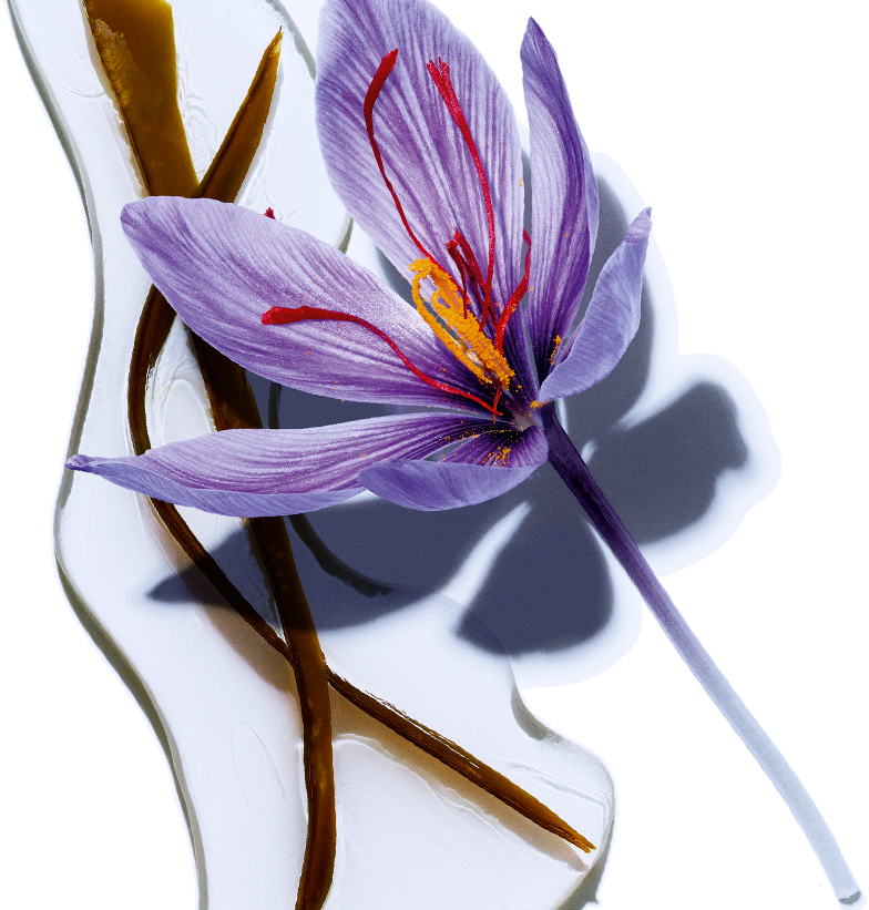 Seaweed - Organic Saffron Flower
