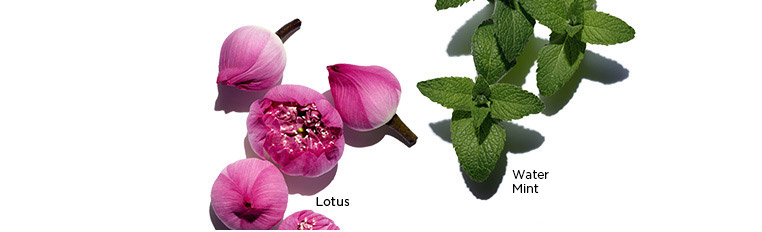 Visuals of Lotus, Chamomile, and Field Mint ingredients